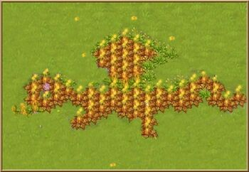 Dragonweeds1