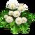 Dandelion new
