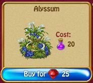Alyssum r375