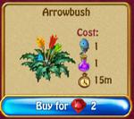 Arrowbush