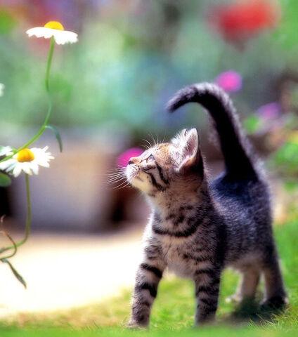 File:Cat cute 33.jpg