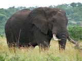Were-Elephant