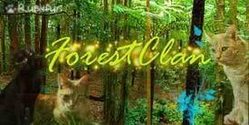 ForestClan (1)