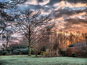 Winterly Sunrise in Garden