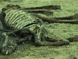 Massacre de Garron II
