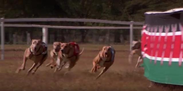 File:Greyhounds-1.PNG