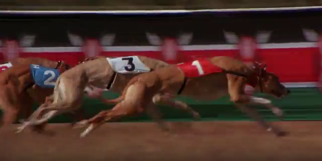 File:Greyhounds-0.PNG