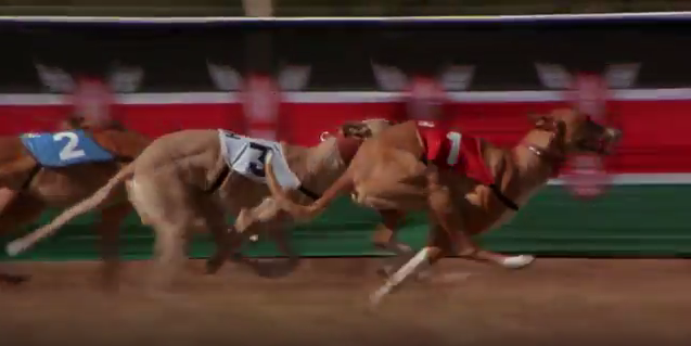 File:Greyhounds.PNG