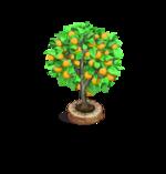 Tree-Apricot
