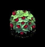 Bush-Raspberry