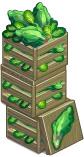 Harvestable-Spinach Crate 3