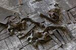 Chernobyl 50