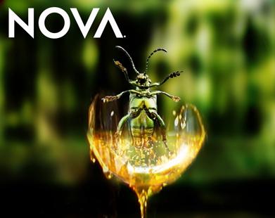 File:Nova.jpg