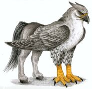 Hippogriff-mythical-creatures-28620890-700-679