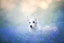 Dog-photography-alicja-zmyslowska-2-10-574036df11709 880