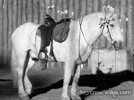 Cheyenne-glorythehorse-renegades