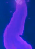 Positron Stream