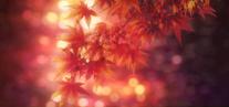 Chihayafuru-soshite-ima-ending-1 (1)