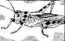 Hoshiboshi cricket manga