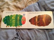 The Very Hungry Caterpillar (11)