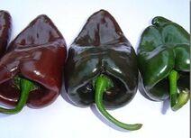 Mulato peppers