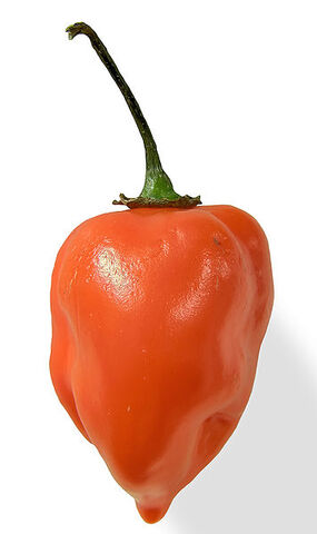 File:356px-Habanero closeup edit2.jpg