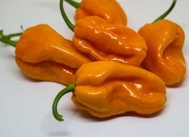 File:Big Sun Pepper.jpg