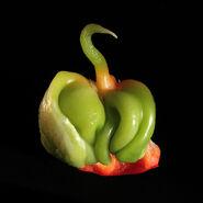Baby Bell pepper Capsicum annuum