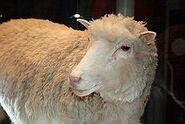 220px-Dolly face closeup