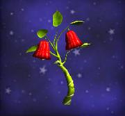 红色灯笼椒
