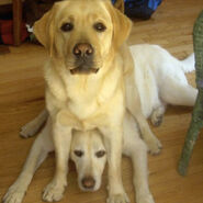 Dogs-sitting-on-dogs-feature