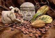 Cocoa-beans-olmecs