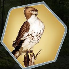 Hawk as seen in Ch. 4