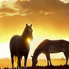 Open Area w/ Wild Horses