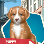 WTCh04 Puppy