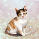 Calico Cat For Userbox Full View