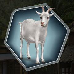Goat (not
