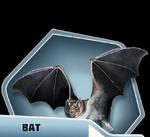 LHBk2Ch15 Bat