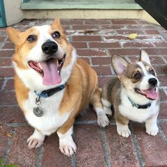 Inspiration behind the TRR Corgi