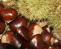 Chestnut nut