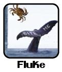 File:Flukeicon.jpg