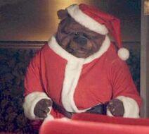 5dcd13735187012e473e45922d2d8583--the-bear-bears-1-