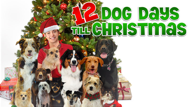12 Dog Days Till Christmas.12 Dog Days Till Christmas Christmas Specials Wiki