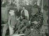 The Fifteen-Foot Christmas Tree