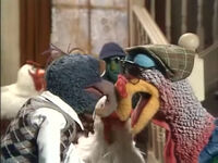 Gonzo vs Turkey