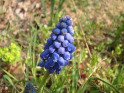 File:Berry-bloom.jpg