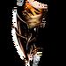 A03 tiger arms
