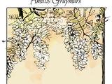 Amatis Herondale
