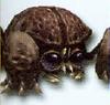 Rockroach