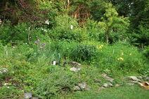 Garden 2010 k1
